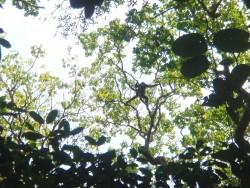 1193px-Spider_monkey_DSC05758.jpg