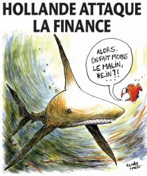 poissonrouge_hollande_requin.jpg